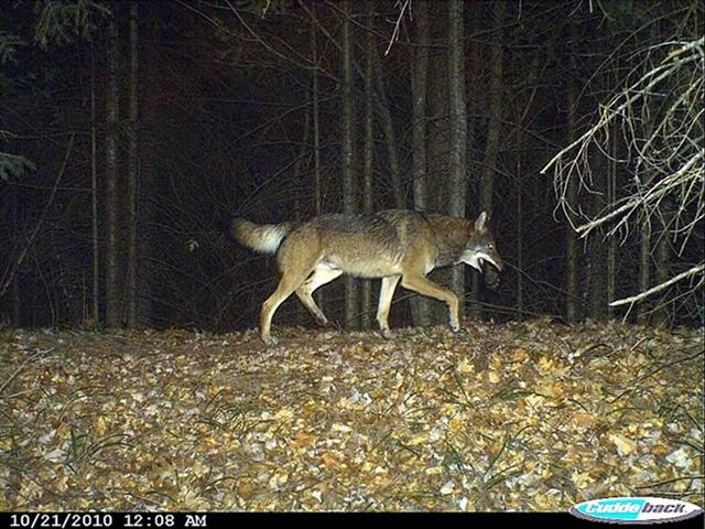 Pics Photos - Scary Deer Camera Pictures Scary Deer Cam Pictures