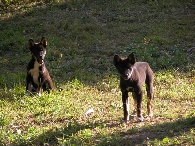 Frisky Dingo  Wikipedia
