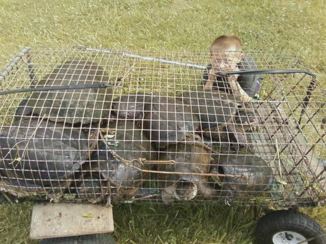 Trapping snapping turtles trapper talk for Homemade fish traps