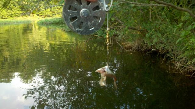 Shtf and traps my opinion trapper talk trapperman for Fishing yo yo
