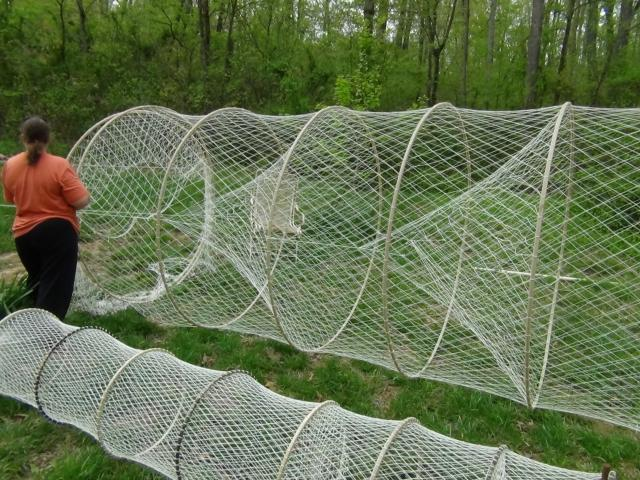 Hoop nets trapper talk forums for How to make a fish trap for big fish