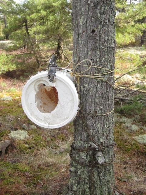 top 12 trap snares