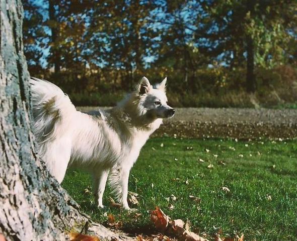 Dog Named Deeogee