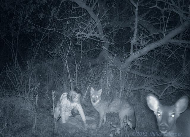 Ghost haunting trail cam pic   Trapper Talk   Trapperman.com Forums Scary Deer Cam Pictures