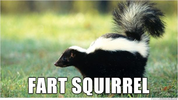 That S Not A Cat Skunk Video